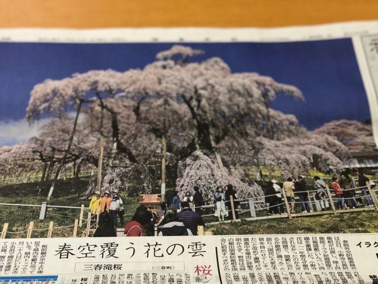 滝桜 新聞